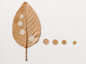 Susanna Bauer e la fragile bellezza delle sculture di foglie uncinetto