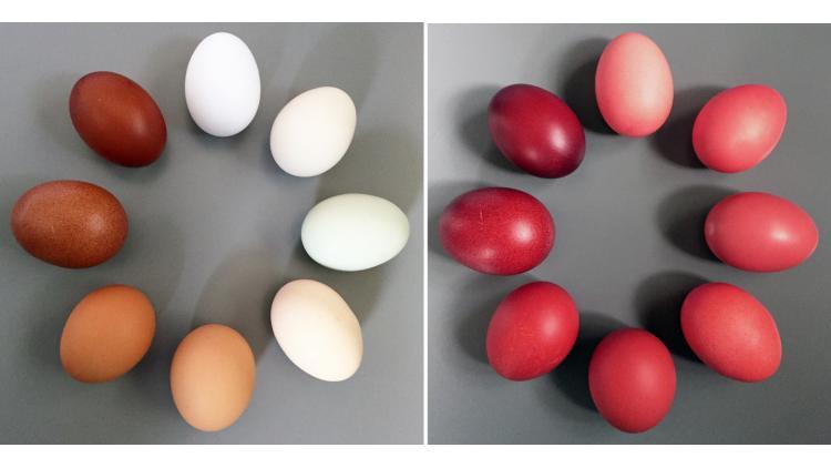 X-rite-Original-and-Red-Egg-Circles-72dpi