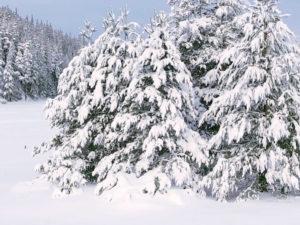 Auguri di Buon Natale e Felice Anno Nuovo per La Nordica – Extraflame